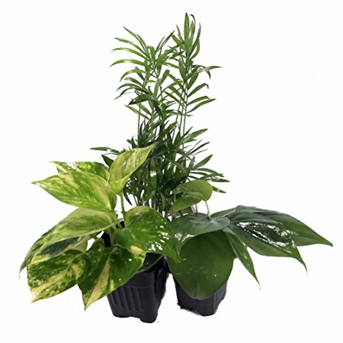 Review Low Light House Plant