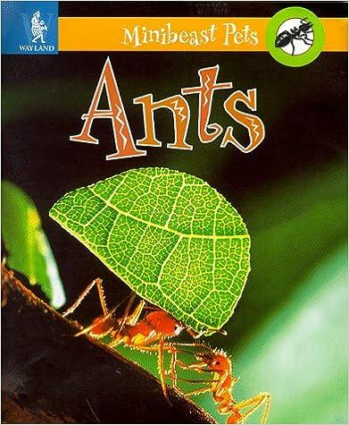 Ants (Minibeast Pets)