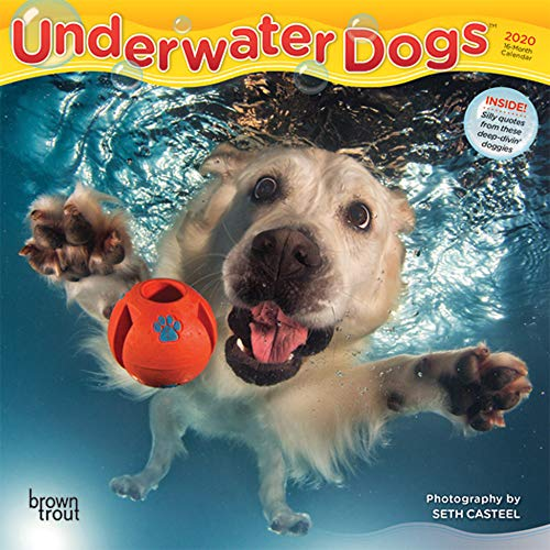 - Underwater Dogs 2020 7 x 7 Inch Monthly Mini Wall Calendar, Pet Humor Puppy