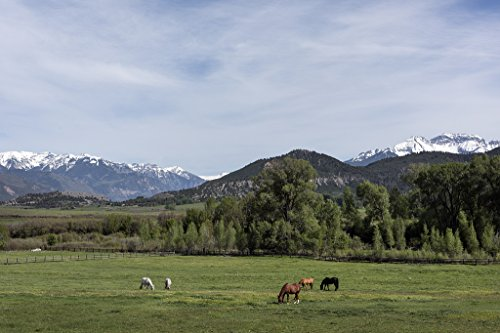 - 24 x 36 Giclee Print of Horses Graze in a Beautiful Valley in The Foothills of The San Juan Range of The Rocky Mountains just Outside The Town of Ridgway which Calls Itself The Gateway to The San
