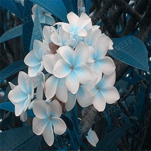 盆栽200個/袋プルメリア鉢植えフランジパニレイフラワー希少なエキゾチックEggFlowerパーフェクト色DIYのホームPLNG