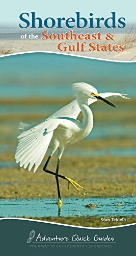 Shorebirds of the Southeast & Gulf States (Adventure Quick Guides)