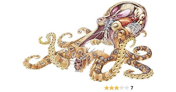 Multiple Patterns /& Sizes Octopus Squid ebn936 Vinyl Decal Sticker