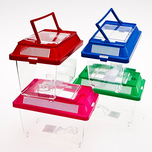 Plastic Fish/Bug Box, Assorted ()