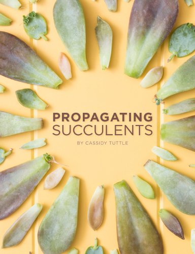 propagating-succulents-a-guide-to-propagating-succulents-from-leaves-and-cuttings-succulent-care-by-