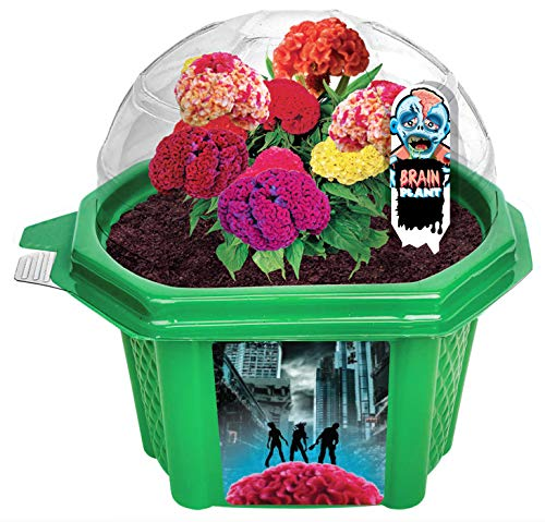 Grow Your Own Zombie Brains - Complete Kids Terrarium Kit to Grow Plants That Look Like Real Brains - Includes Everything Needed to Start Attracting Zombies (Best Plants For Kids)