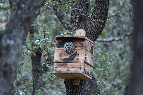 Small Screech owl house. 1 UNIT. OWL Houses. NESTING BOX. BY. M.HOLLEY. FOR OWL RE-HABE AND OUT SIDE USE. Best on market. Made in Ohio U.S.A. ONLY BY U.S.A. RAW MATERIAL AND U.S.A. VETS. Small Chipboard House