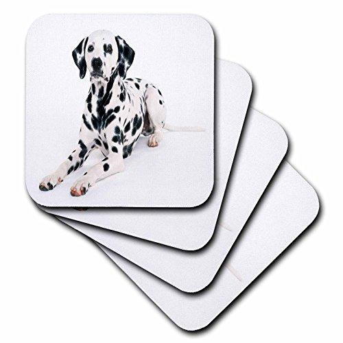 Portrait Thick 0.25 Glass - 3dRose CST_49310_3 Majestic Dalmation Portrait-Ceramic Tile Coasters, Set of 4