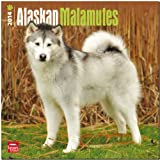 Alaskan Malamutes Calendar (Multilingual Edition)
