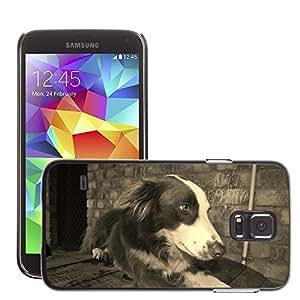 Etui Housse Coque de Protection Cover Rigide pour // M00130649 Perro Collie Raza Canina perrito // Samsung Galaxy S5 S V SV i9600 (Not Fits S5 ACTIVE)