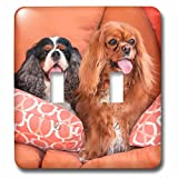 3dRose Danita Delimont - Dogs - Cavaliers on pillows, MR - Light Switch Covers - double toggle switch (lsp_258242_2)