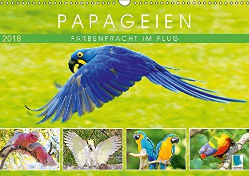 Papageien: Farbenpracht im Flug (Wandkalender 2018 DIN A3 quer): Papageien: Bunte Exoten im Porträt (Monatskalender, 14 Seiten ) (CALVENDO Tiere) [Kalender] [Apr 01, 2017] CALVENDO, k.A.