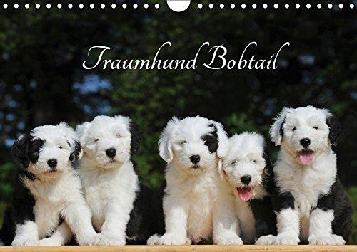 Traumhund Bobtail (Wandkalender 2018 DIN A4 quer): Der Bobtail, der Old English Sheepdog, auf 13 bezaubernden Bildern (Monatskalender, 14 Seiten ) ... [Kalender] [Apr 27, 2017] Starick, Sigrid