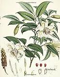 nature notebook - Notebook: Vintage Floral Sketchbook 120 Pages of 8.5