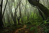 Reptile Habitat, Terrarium Background, Creepy Mossy Forest, 14'' x 24''