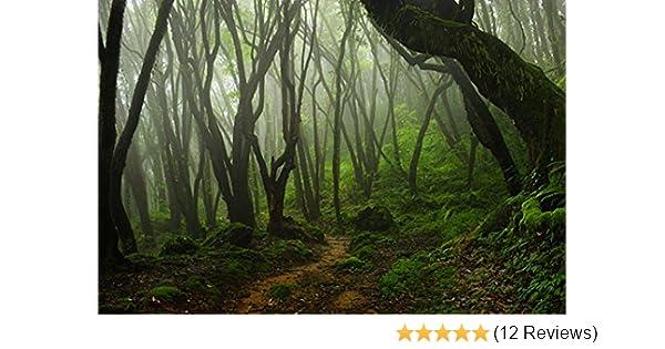 Amazon Com Reptile Habitat Terrarium Background Creepy Mossy