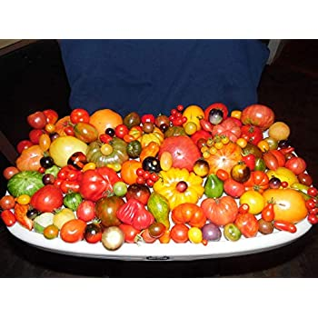 MIX from 165 DIFFERENT KINDS of TOMATOES 200 Seeds SEE LIST