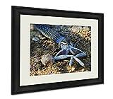 Ashley Framed Prints Juvenile Boomslang Eating A Frog, Wall Art Home Decoration, Color, 30x35 (frame size), AG6093031