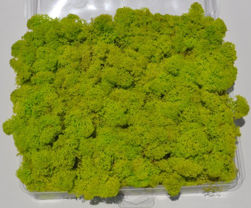 Reindeer Moss, Preserved - Spring Green (Chartreuse), 20-Ounce (1.25 Pounds) in a Designer Series Clear Case. (Reico Art 108055 - Soft and Colored Reindeer Moss) by Reico Art
