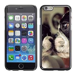 PC/Aluminum Funda Carcasa protectora para Apple Iphone 6 Plus 5.5 Terrier Dog Mother Love Sweet Cute / JUSTGO PHONE PROTECTOR