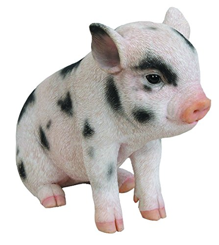 ting Baby Pig with Black Spots, 6