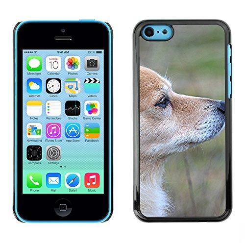 Premio Sottile Slim Cassa Custodia Case Cover Shell // F00016731 chien Rusty // Apple iPhone 5C
