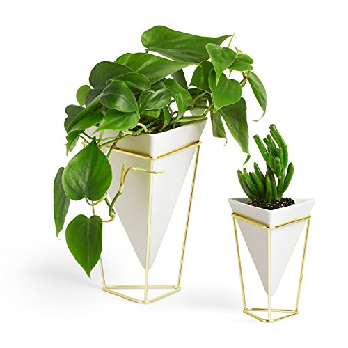 Umbra Vase (Umbra Trigg Desktop Planter Vase & Geometric Container - Great For Succulent Plants, Air Plant, Mini Cactus, Faux Plants and More, White Ceramic/Brass (Set of 2))