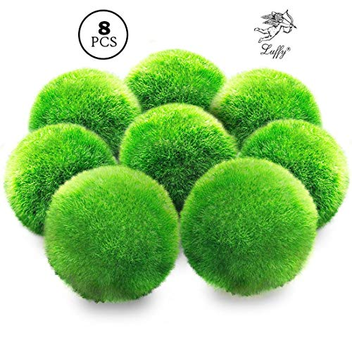 Luffy 8 Marimo Moss Balls - Jumbo Pack of Aesthetically Beautiful Plants - Create Healthy Surroundings - Low-Maintenance Live Play Balls - Shrimps & Snails Love Them