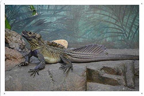 Tin Poster (20x30cm) of Sailfin Lizard 18424 by Global Animal Sign