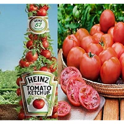 Heinz Tomato Seeds - Fruit Seeds / Vegetable Seeds (10) : Garden & Outdoor