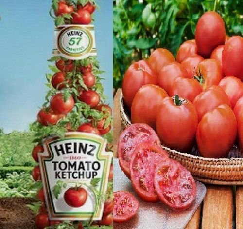 Heinz Tomato Seeds - Heinz Tomato Seeds- Comb. S/H See our store