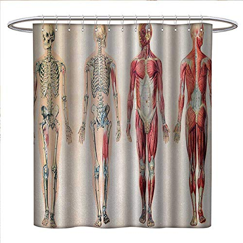 (Anniutwo Human Anatomy Shower Curtains with Shower Hooks Vintage Chart of Body Front Back Skeleton and Muscle System Bone Mass Graphic Satin Fabric Sets Bathroom W72 x L72 Ruby Cream)