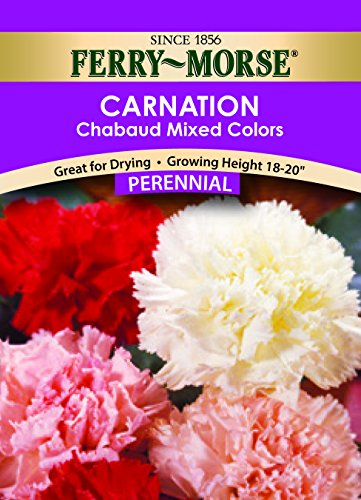 Ferry-Morse Carnation Chabaud Giant Mixed Colors Seeds (Perennial)