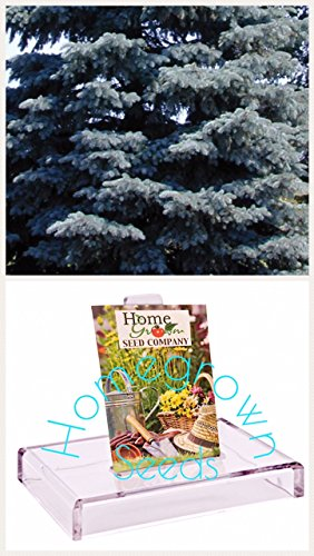 Homegrown Spruce Seeds, 80, Blue Colorado Spruce Tree