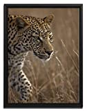 Wanted Art Ready to Hang 1.5'' Thick Framed Canvas 50in by 38in on the Prowl Cheetah Hunter Africa Grass