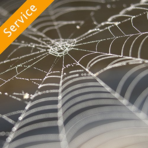 Spider Control by Amazon Home Services