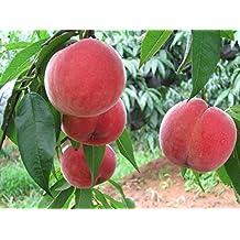 Sweet Peach Seeds, Autumn Red Peach Tree Fruit Seeds