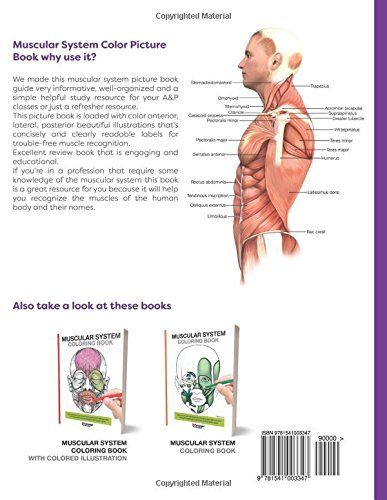 Musculoskeletal Anatomy Coloring Book By Joseph E Muscolino : Amazon.com: muscular system color picture book: beautiful