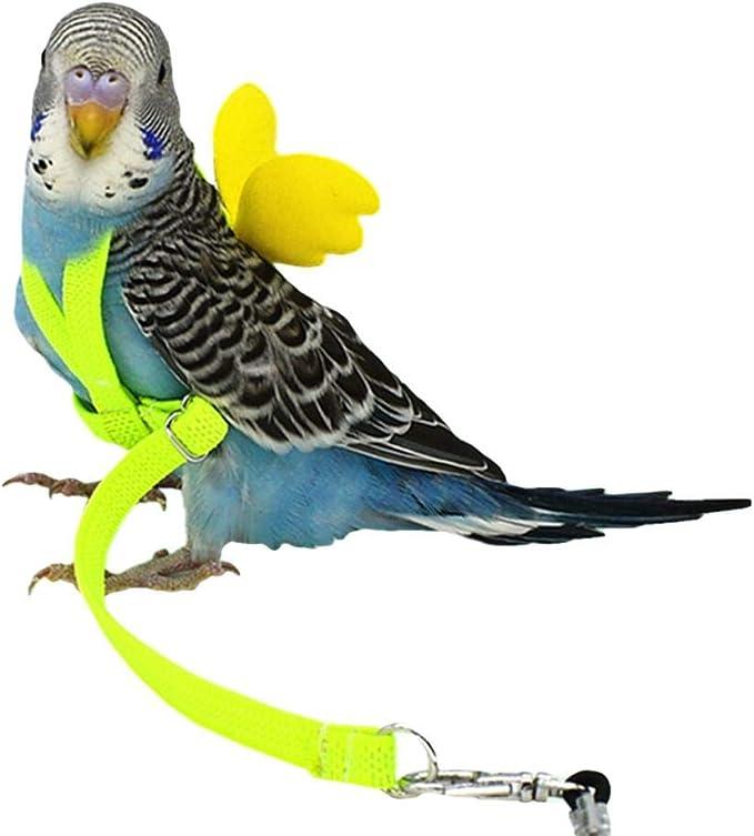 Harnais Perroquet, Harnais Oiseau Calopsitte Harnais Et Laisse pour Oiseaux Perroquet  pour Animaux De Compagnie Cordes Volantes Corde D'entraînement en Plein Air  Corde De Traction: Amazon.fr: Animalerie
