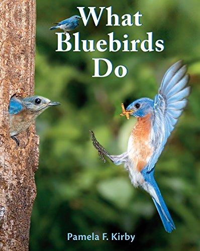 What Bluebirds Do