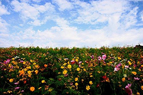 Midwest Wildflower Blend (500 SQFT)