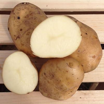 Kennebec Seed Potatoes, 5 lbs. (Certified): Grocery & Gourmet Food