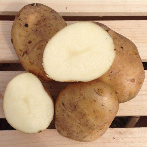 Kennebec Seed Potatoes, 5 lbs. (Certified)
