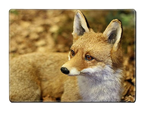 Luxlady Placemat IMAGE ID 21433299 young specimen of Fox while resting lying in the middle of the leaves in autumn 2 (Embalming Table compare prices)