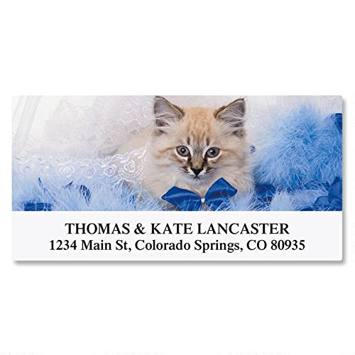 Cat Return Address Labels - Everyday Cats Self-Adhesive, Flat-Sheet Deluxe Address Labels by Colorful Images, Count 144 (12 Designs)