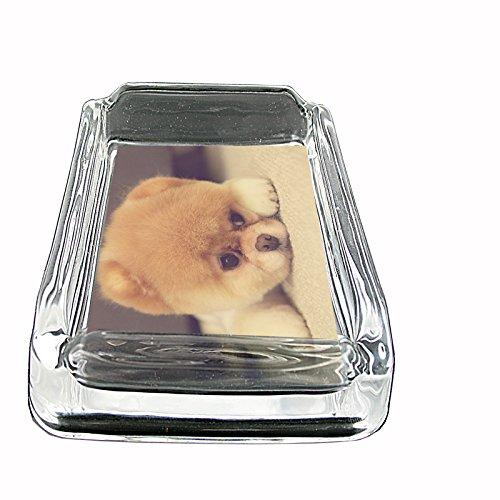 Dog pompom pomeranian pup Glass Square -