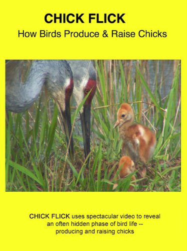 Chick Flick: How Birds Produce and Raise Chicks