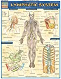 Lymphatic System (Medical Series)