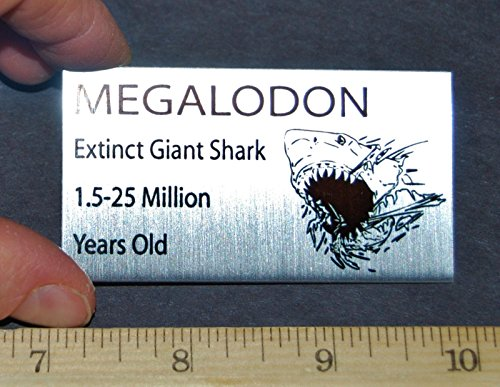 MEGALODON Tooth Fossil Extinct Shark Metal Display Label (Fossil Display)