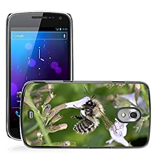 Hot Style Cell Phone PC Hard Case Cover // M00114984 Bee Insect Flower Close Honey Bee // Samsung Galaxy Nexus GT-i9250 i9250